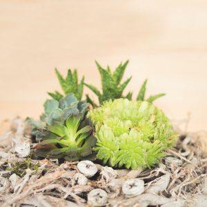 centro-plantas-crasas